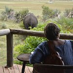 On the deck in front of our tent, visiting elephants
