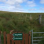 Doggy Walk area