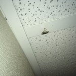 mold forming on drop-ceiling framework in bathroom (b)