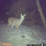 Deer Back Trail