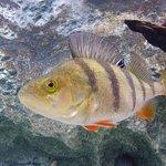 Visite de l'Aquarium , belle découvertes et infos utiles