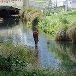 Foto de Avon River