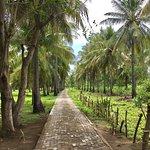 Foto de Sunset Palms Resort