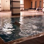 indoor pool, beside gym