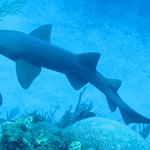 lots of nurse sharks on the dives
