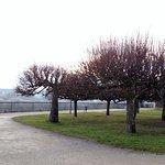 Arvores típicas