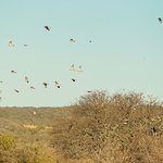 Dove Shooting Fields - Los Chañares