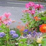 The summer garden of Briar Bank