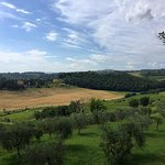 View from patio and the Locanda Olive Gardens (you can buy their olive oil) - June 2016