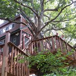 White Oak Treehouse