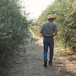 American Olive Farmer Since 1947