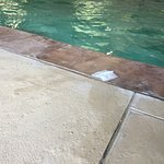 Pool area needs improved cleaning. Found a gauze pad in the water.