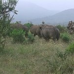 Hluhluwe Game Reserve the place to vissit   Hluhluwe Backpackers is 2km from Memorial gate