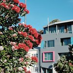 You know it's Xmas time when the Pohutukawa trees are flowering..