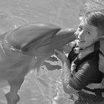 Dolphin Discovery Puerto Vallarta Foto