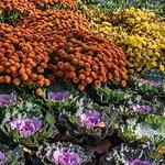 Gardens at Cantigny