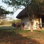 Photo de Zululand Safari Lodge