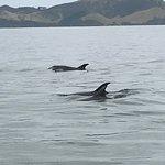 Foto de Carino Sailing & Dolphins