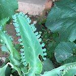 beautiful flora at Pakachere