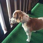 Unser Hund genießt die Aussicht vom Balkon