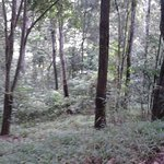 Part of Karura Forest