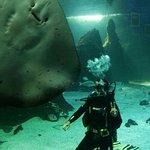 Photo de Lanzarote Aquarium