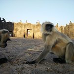 Photo of Ranthambore Fort