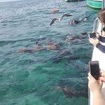 Foto di Island Divers Belize