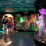 Can you find this hidden aquarium when you come to visit?