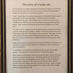 The story of Sysco the cat