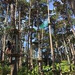 Adrenalin Forest Foto