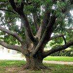 Beautiful old shade trees in Yarram Memorial Park