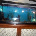 Hotel fish