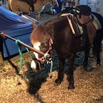 Pony chained at Santa's Enchanted Forest