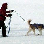 Skijoring with our Husky dog!