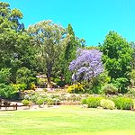 View of a Jacaranda tree across one of the lawns