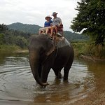 Elephant riding in Khoa Sok National Park