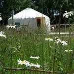 Swallow yurt