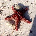 Zanzibar plage de l'hôtel Neptune