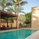 Photo of Desert Palm PER AQUUM