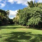 Kampong gardens - photo ANGELINGS