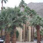 Fan Palms are along the street near the Best Western