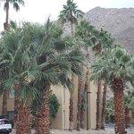 Foto di BEST WESTERN Inn at Palm Springs