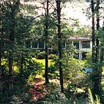 Nuestro bosque.