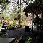 Photo de The Rainforest Cafe