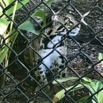 Naples Zoo at Caribbean Gardens Foto