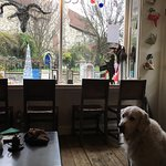 View through the front window, of St Peter's church.  Dogs are welcome in the coffee cafe.