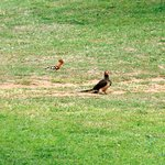 Themba's Birding and Ecotours Foto