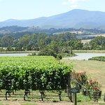 Vines at Domain Chandon