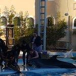 Wonderful Dolphin show at Sharm